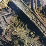 Abbildung der unsichtbaren Larve einer Ephemera danica
