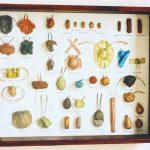 Schaukasten mit erfundenen Käfern