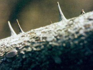 art conceptual Ephemeroptera mayflies