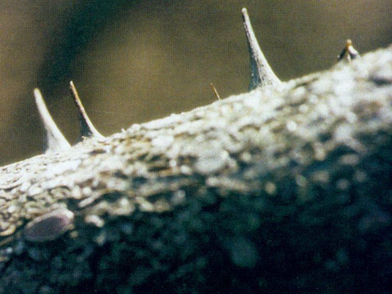 Kunst Konzeptkunst Ephemeroptera Eintagsfliegen Schaukasten