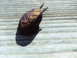 art conceptual beetles coleoptera show case fiction