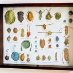 Conceptual art, objects, beetles, humor, display case