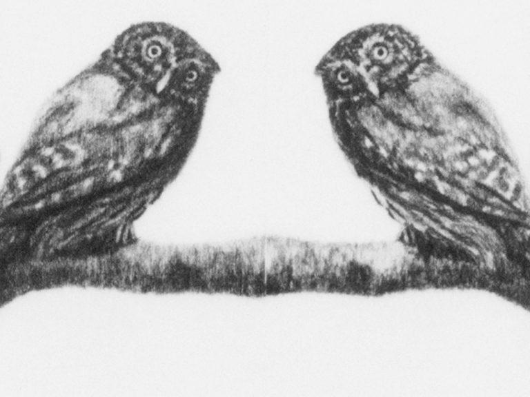 Kunst Konzeptkunst Zeichnung Wiederholung Tiere