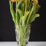 Fotografie verblühtes Blumenstillleben gelbe Tulpen Glasvase schwarzer Hintergrund