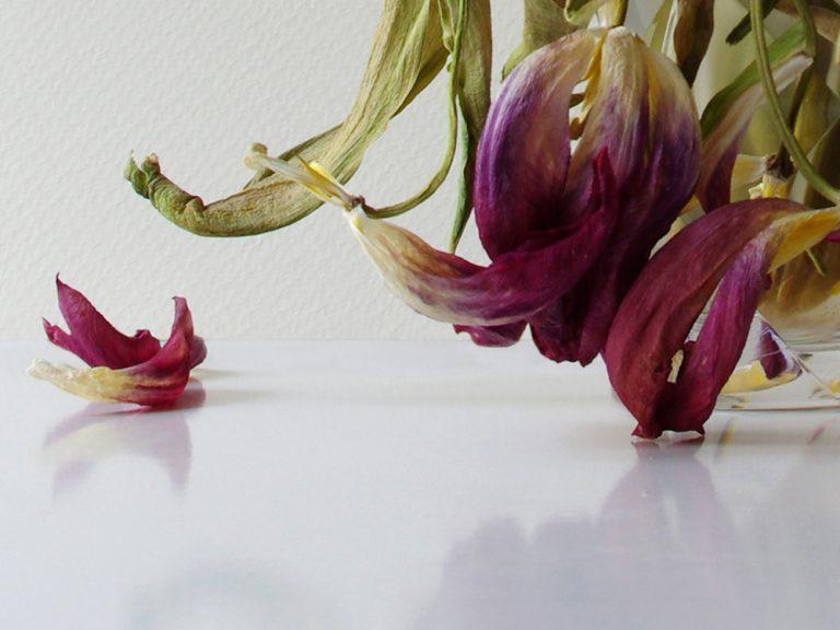 Konzeptkunst, Fotografie, Stillleben, verwelkende Blumen