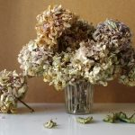 Photography, conceptual art, still life, withering flowers, hydrangea